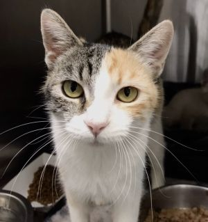 Andrea was rescued with her 5 kittens some who have already been adopted Andrea is a bit timid at