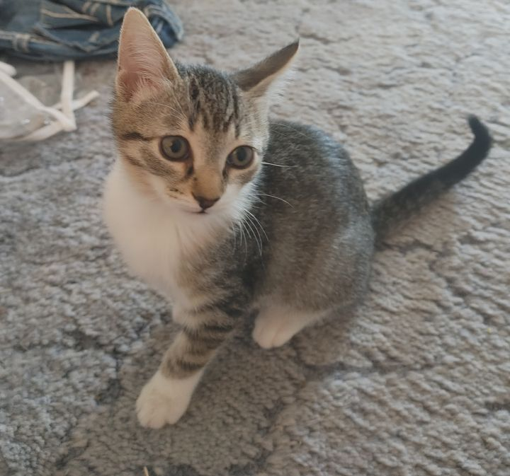 Elizabeth's Four Kittens 3