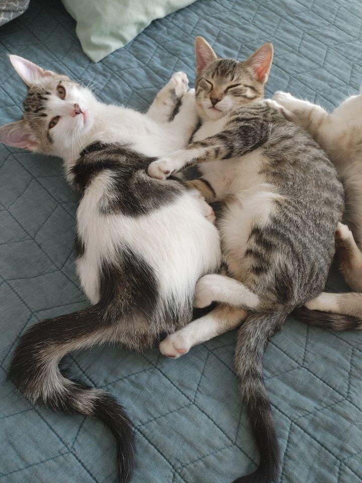 Elizabeth's Four Kittens 6