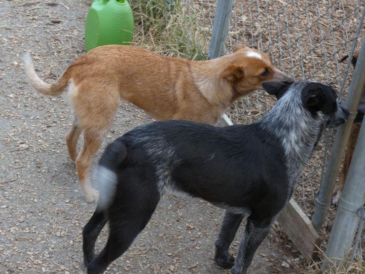Foxy and Bandit 4