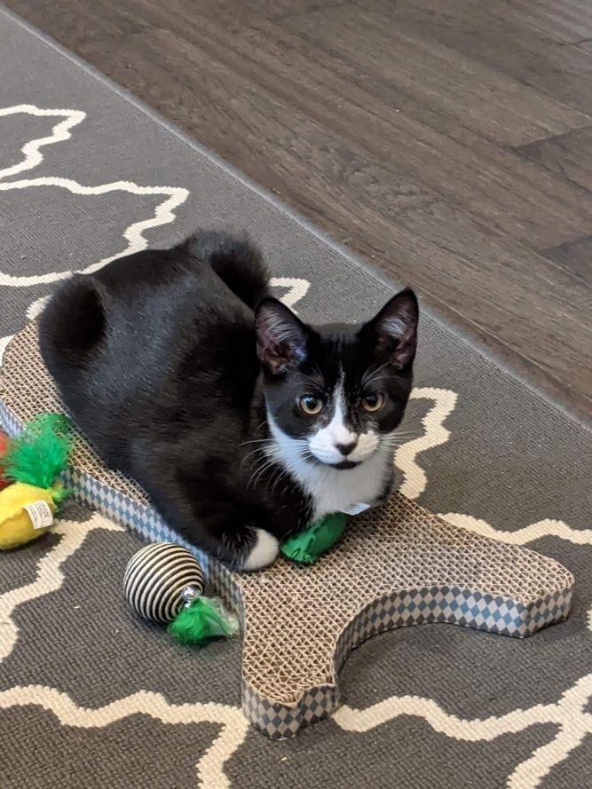 Tux and Gigi-Reduced Adoption Fee