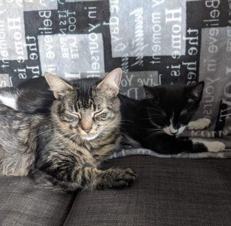 Tux and Gigi-Reduced Adoption Fee 4