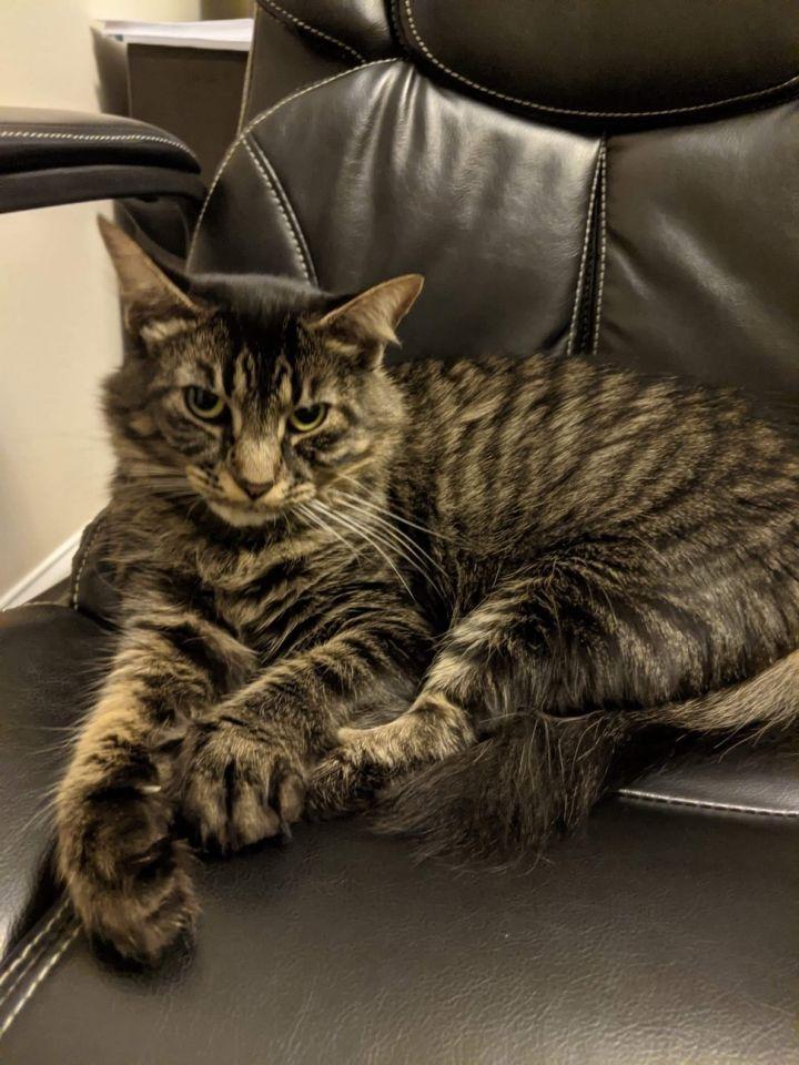 Tux and Gigi-Reduced Adoption Fee 3