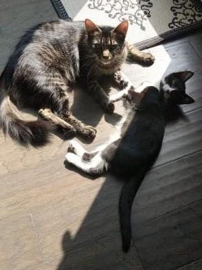 Tux and Gigi-Reduced Adoption Fee 5