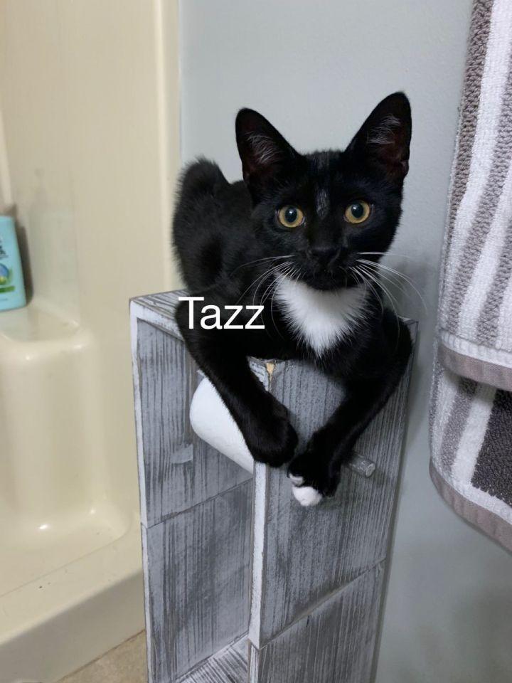 Tazz 1