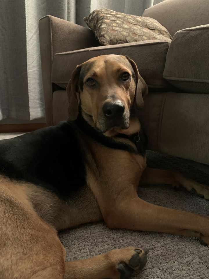 Luke, an adoptable Hound Mix in Minneapolis, MN