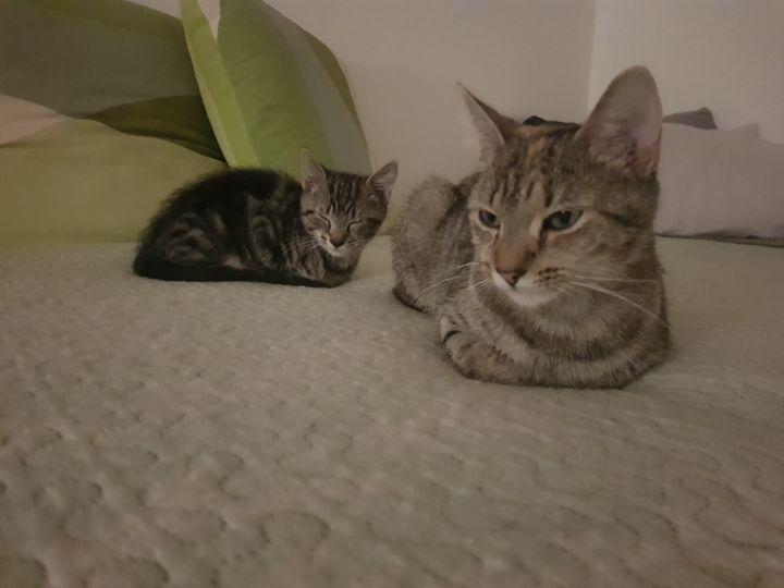 Cyrus & Cinder 2