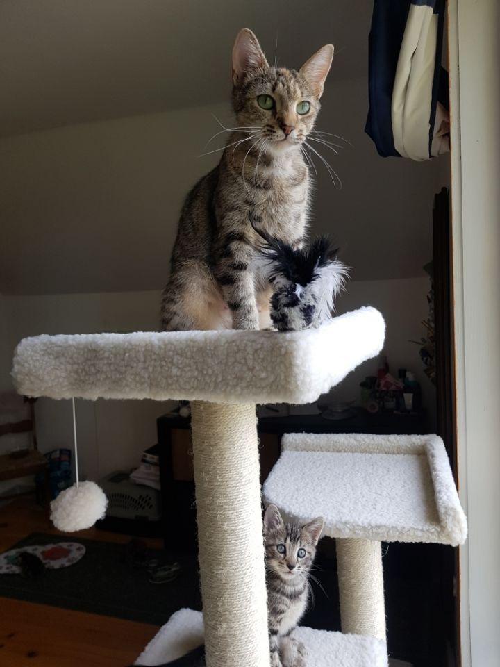 Cyrus & Cinder 6