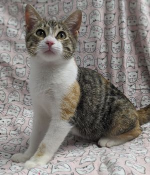 Meet Ciara our calico beauty She was rescued from the dangers of the street by a kind soul in the