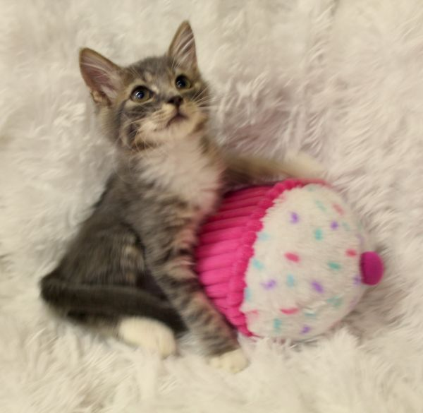 Cuddly Cosette