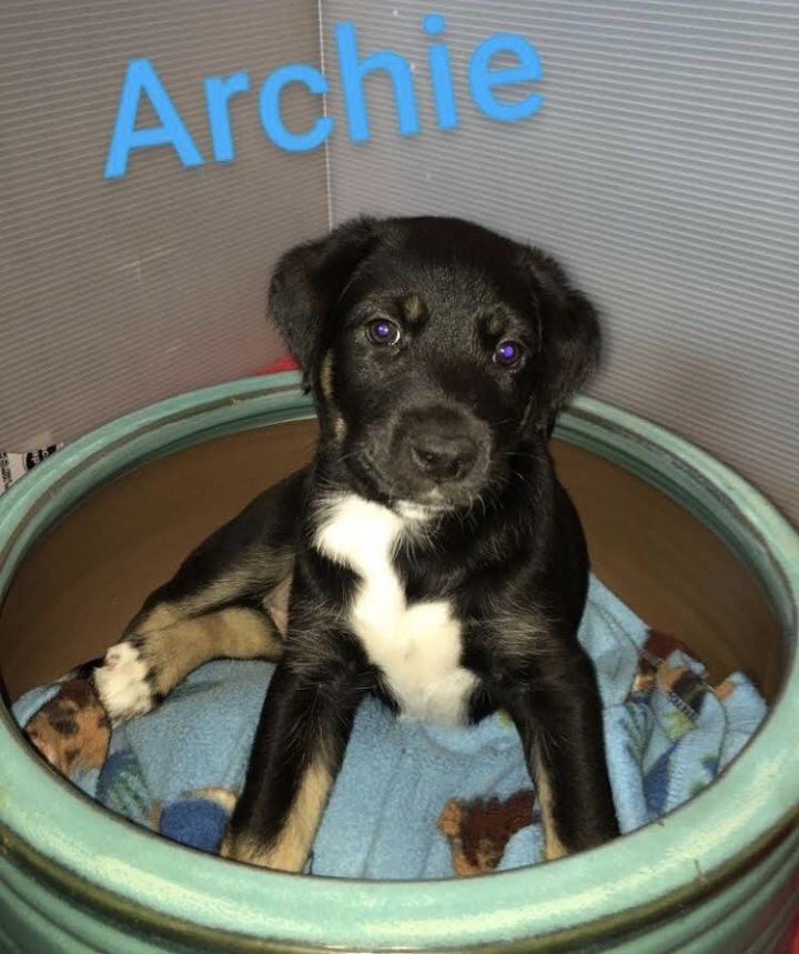 Archie, an adopted Mixed Breed in Saskatoon, SK
