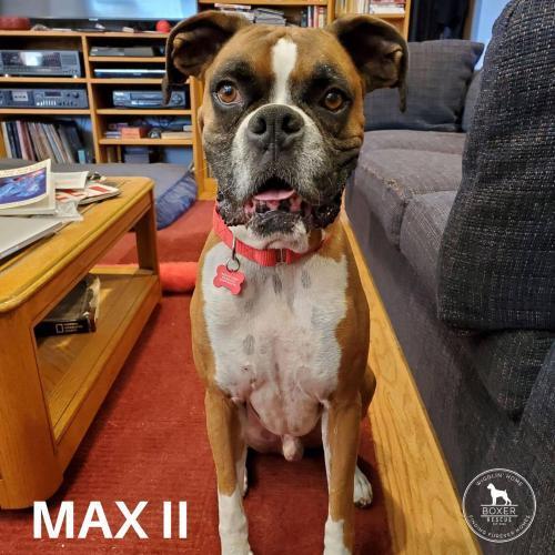 Max II 1