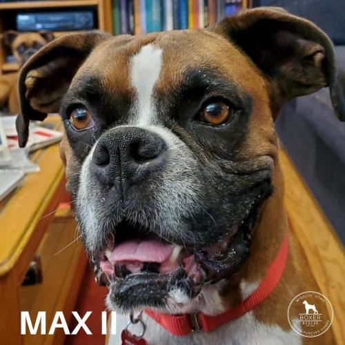 Max II 3