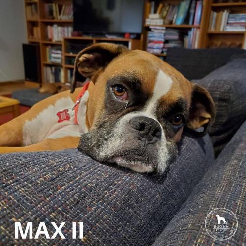 Max II 2