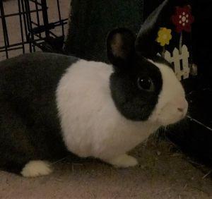 Mercedes Bunny Rabbit Rabbit