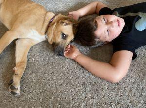 Lola Shepherd Dog
