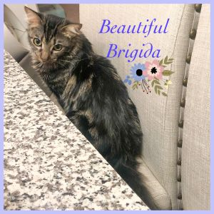 Brigida is a gorgeous fluffy silly and playful girl who loves being pet Shes so silly and is alw