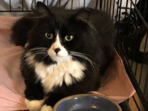We are a 501c3 cat rescue group trying to find a home for the totally adorable g