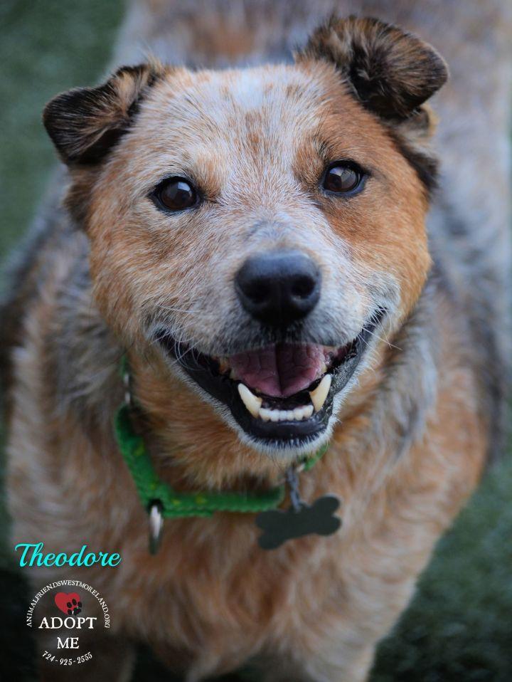 Theodore 2