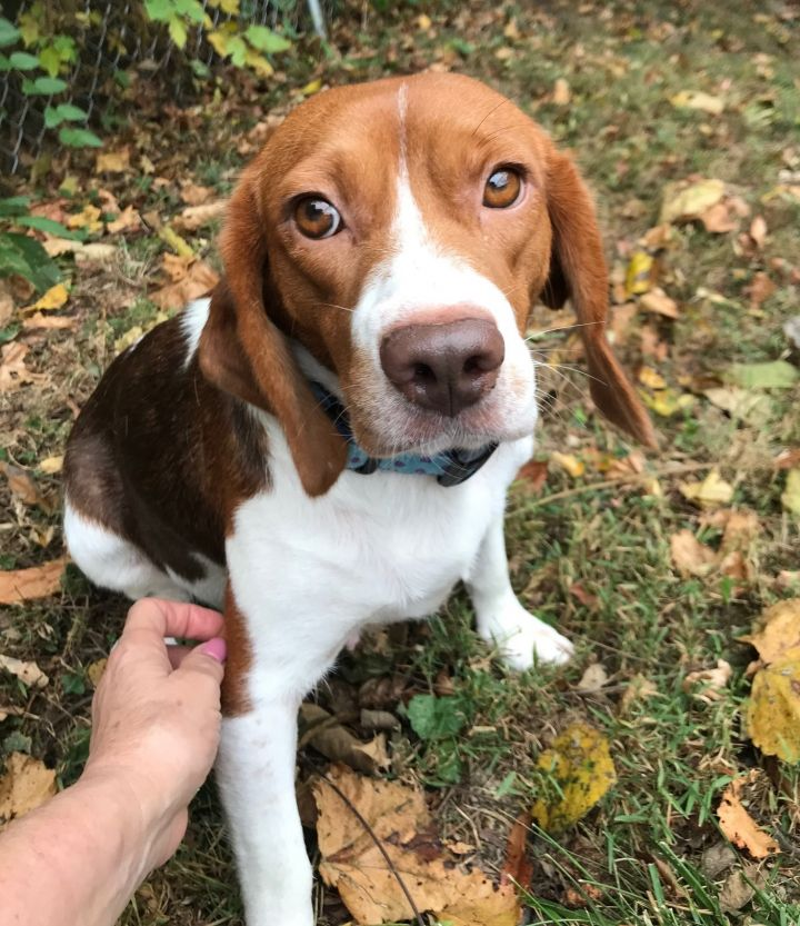 Ms, Beasley Available! www.lhar.dog to apply! 2