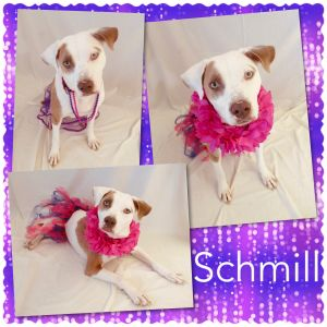 Schmill - Pawsitive Direction Program