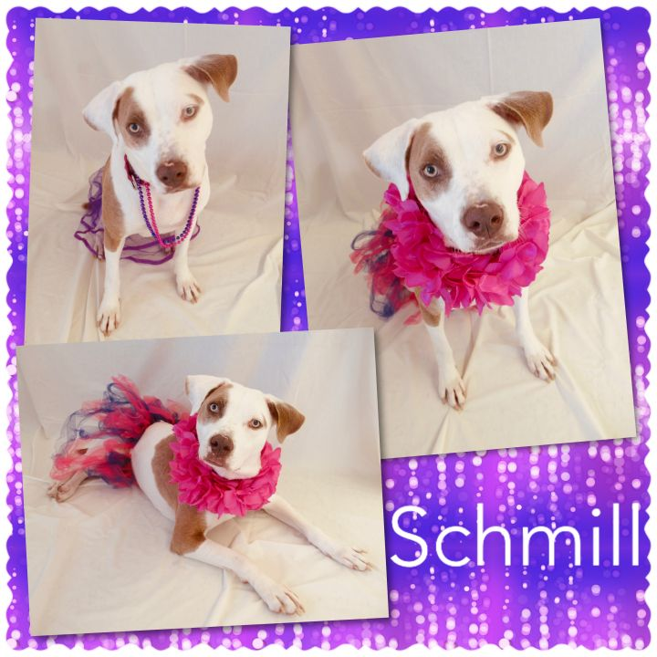 Schmill - Pawsitive Direction Program 1