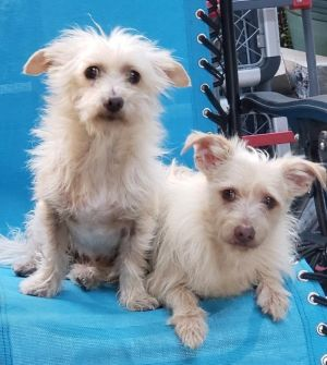 PLEASE READ FIRST We are located in LOS ANGELES CA we DO NOT adopt outside of the Southern Califo