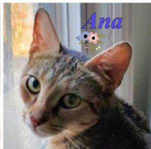 Sadly ANA was found abandoned in the backyard of a building in the Bronx We we