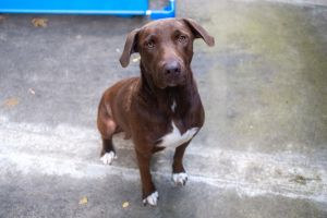Birthdate 5102019 Breed One of a kind Before you can adopt sweet Brownie pl