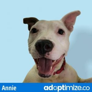 Annie came into the city shelter emaciated and with an injured foot The staff there did a great job