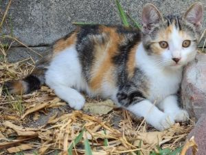 Nutmeg is a super lovely kitten living in a foster home with her two siblings and mom cat She is