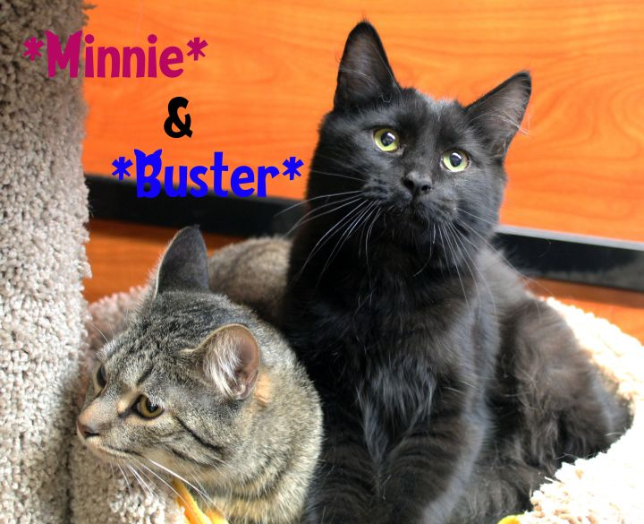 Buster (Bonded with Minnie) 3