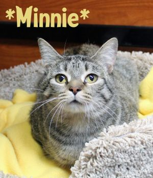 Buster (Bonded with Minnie)