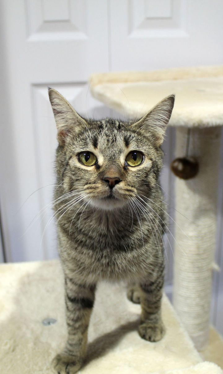 Buster (Bonded with Minnie) 5