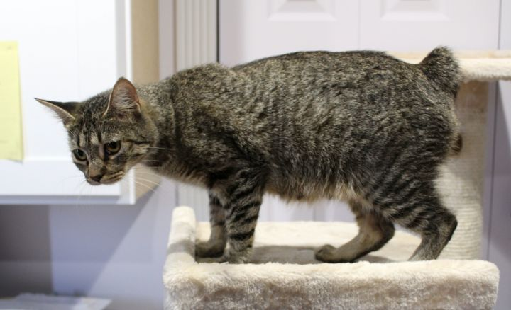 Buster (Bonded with Minnie) 6