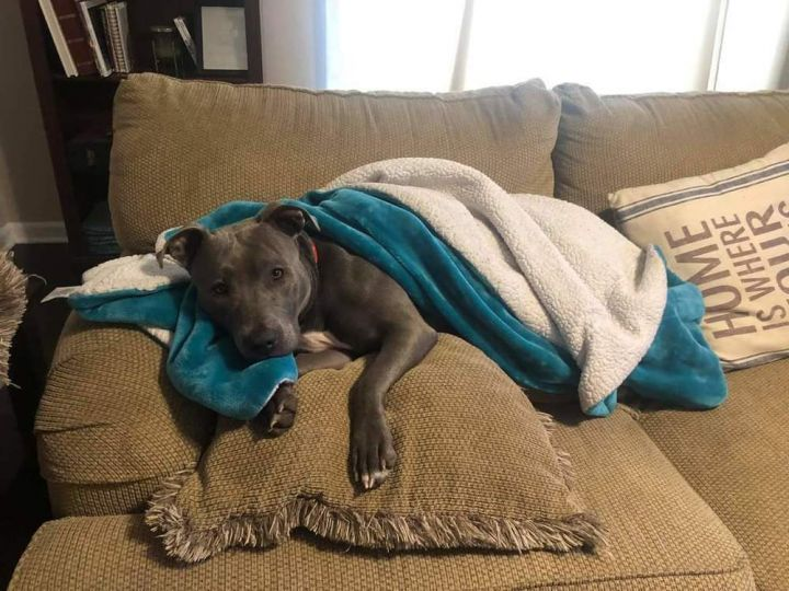 Ellie (Fostered in Omaha) 1