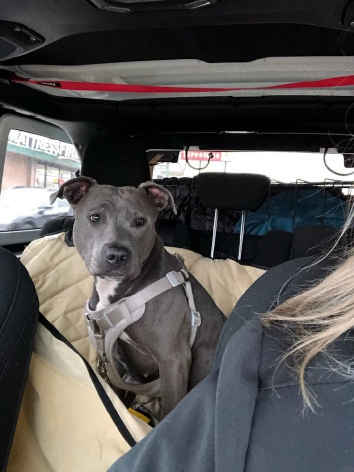 Ellie (Fostered in Omaha) 6