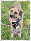 Orla - Adoption Pending!!