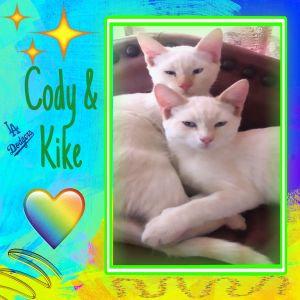 Cody  Kike 4 month old super cute Siamese boys They are full of personality and so much fun They