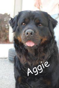 Aggie 2