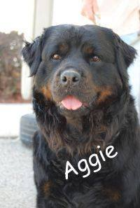 Aggie 2 1