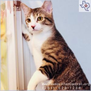 If you would like to adopt a pet please visit us at any of our adoption sites d