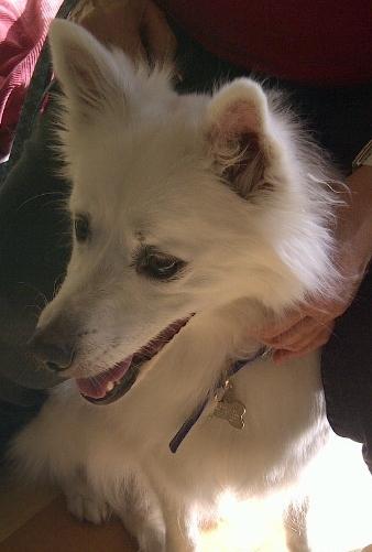 Buddy-Adopted! 1