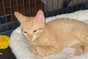 This playful kitty loves to pounce and run Hes a big fan of skidding around on