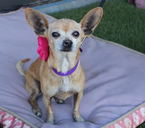 Perla was taken to the pound but was so frightened they did not intake her but i