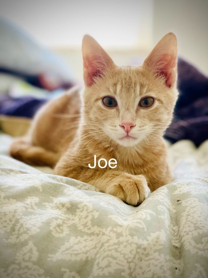 Joe 1