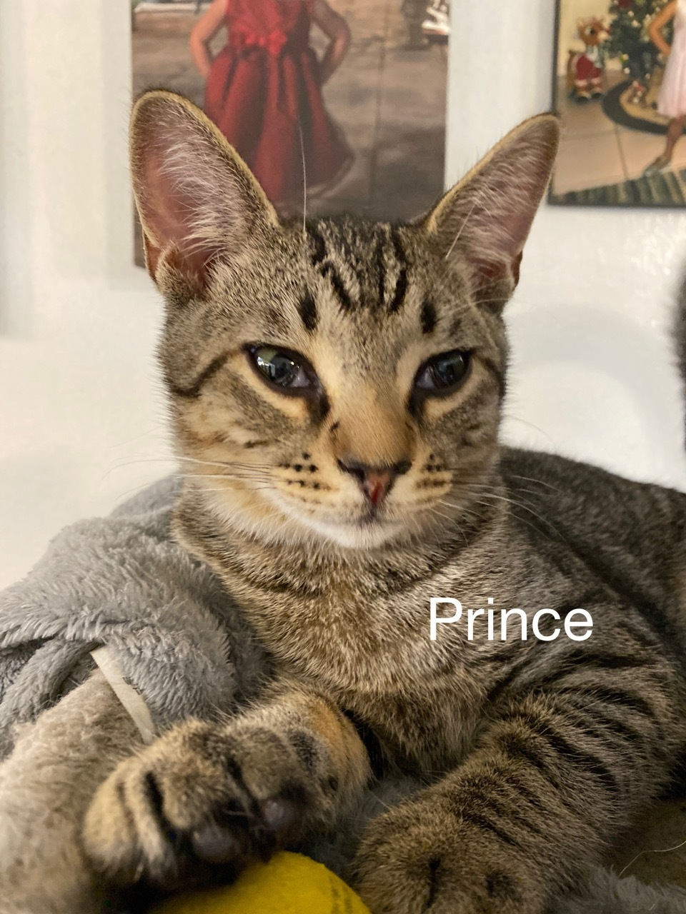 Prince detail page