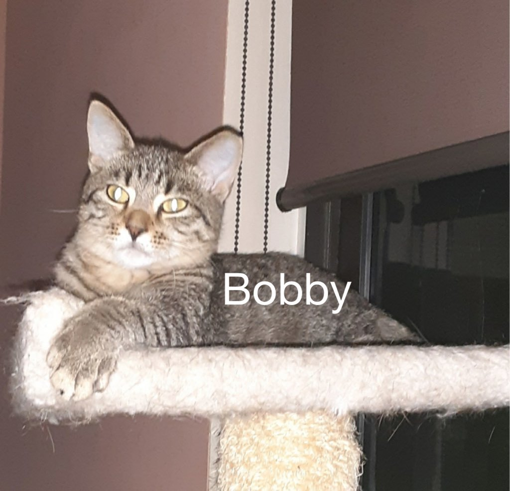 Bobby detail page