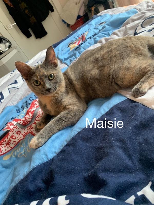 Maise