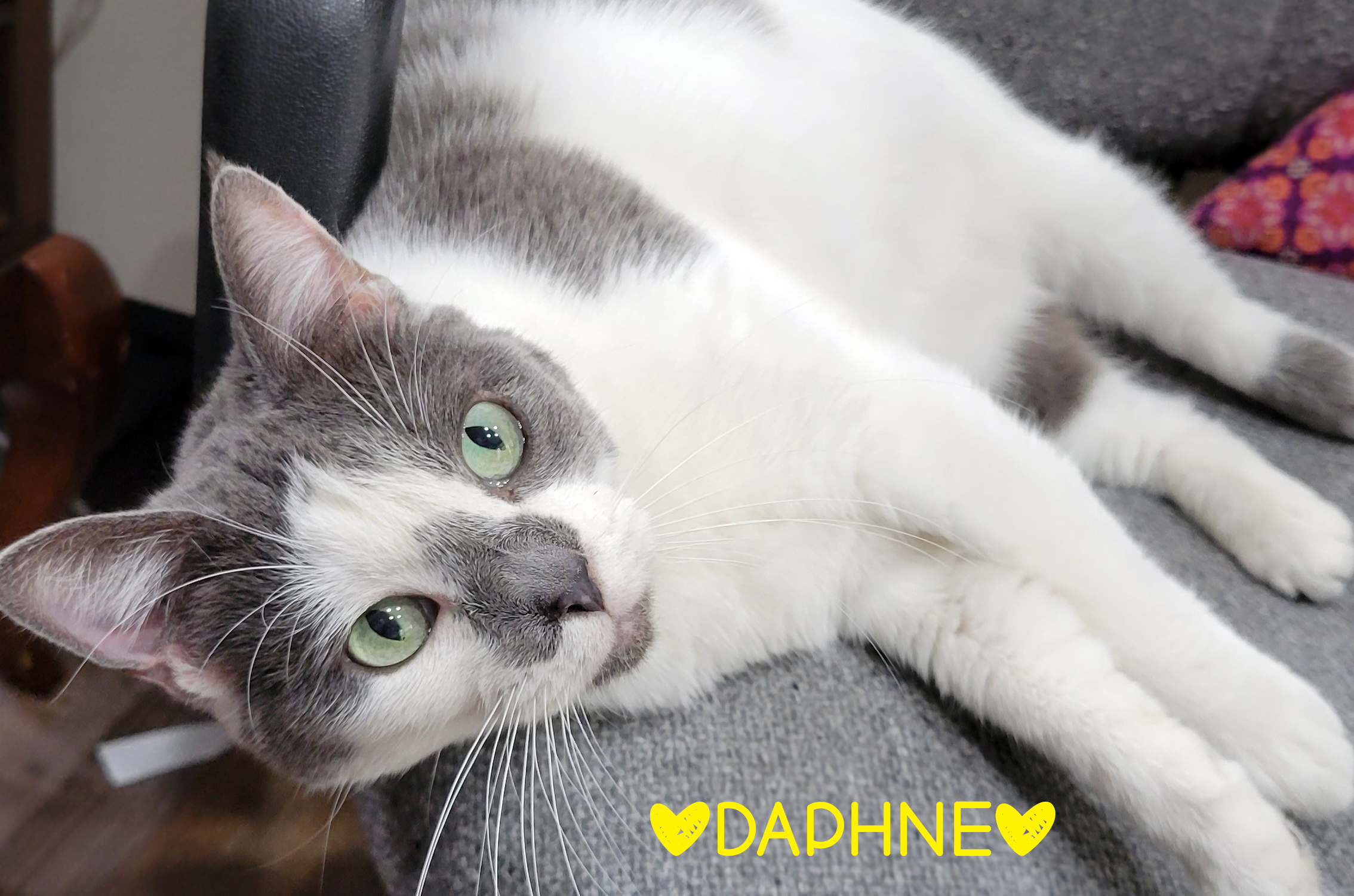 Daphne detail page